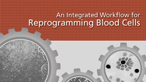 An Integrated Workflow for Reprogramming Blood Cells