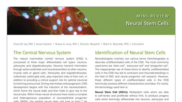 Neural Stem Cells: Identification, Function, Culture, and Isolation