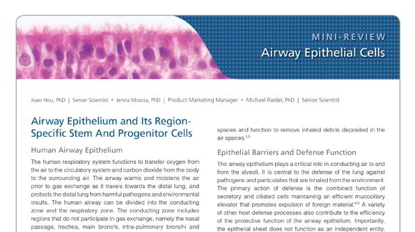 Airway Epithelial Cells of the Human Respiratory System