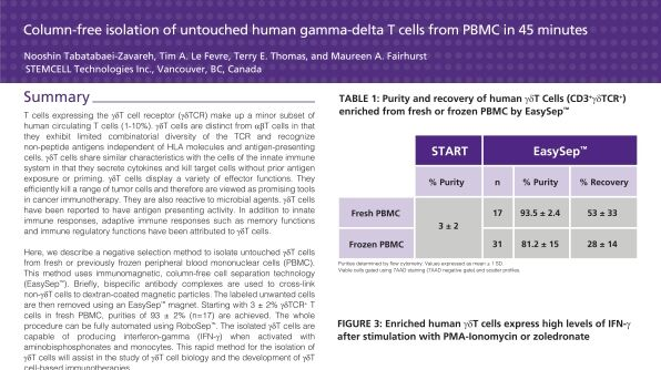 Immunomagnetic Cell Isolation of Human Gamma-Delta T Cells from PBMC