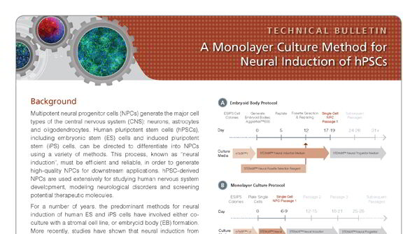 A Monolayer Culture Method for Neural Induction of Human Pluripotent Stem Cells