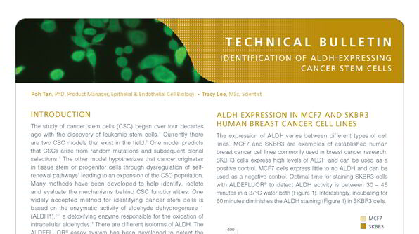 Identification of ALDH-Expressing Cancer Stem Cells Using ALDEFLUOR™
