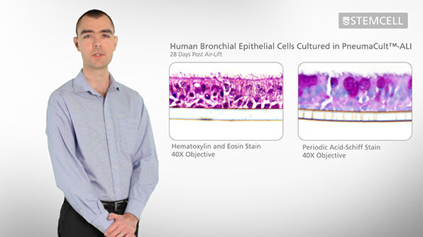 Air-Liquid Interface (ALI) Culture of Bronchial Epithelial Cells with PneumaCult™-ALI Medium
