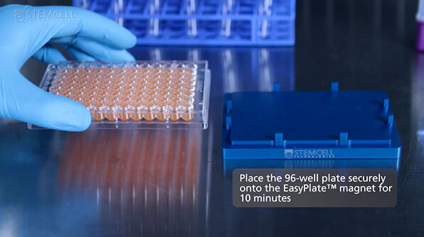 How to Isolate Cells in 96-Well Plates Using the EasyPlate™ Cell Separation Magnet