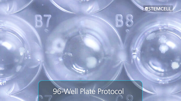 Customizable Semi-Solid Cloning of Mammalian Cells in 96-Well Plates Using ClonaCell™ FLEX Medium