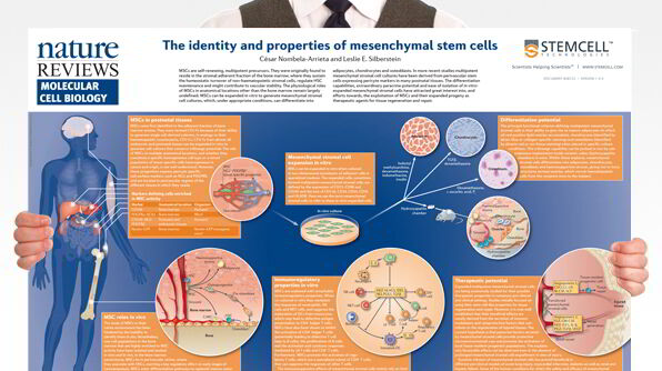 The Identity and Properties of Mesenchymal Stem Cells