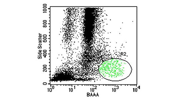 Potential Applications of ALDH Bright Cells In Regenerative Medicine