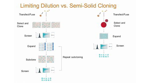 A Smarter Way To Clone: What You Don't Know About Limiting Dilution Can Hurt Your Probability of Monoclonality
