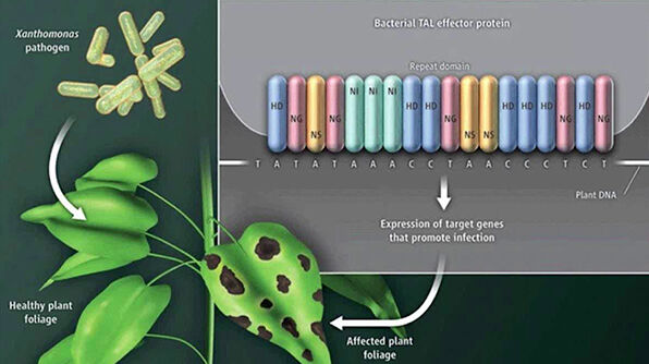 Genome Editing From Modeling Disease to Novel Therapeutics