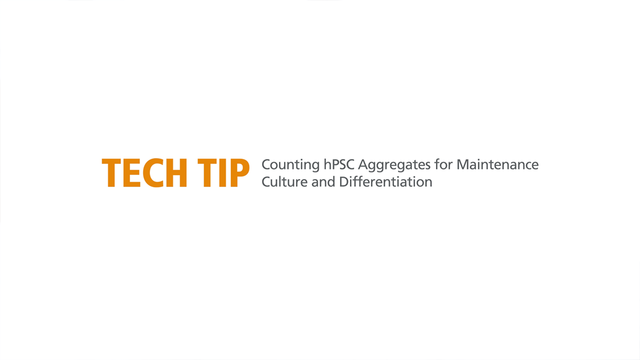How to Count hPSC Aggregates to Determine Plating Density for Maintenance and Differentiation