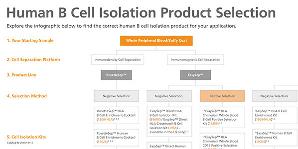 Human B Cell Isolation Product Selection