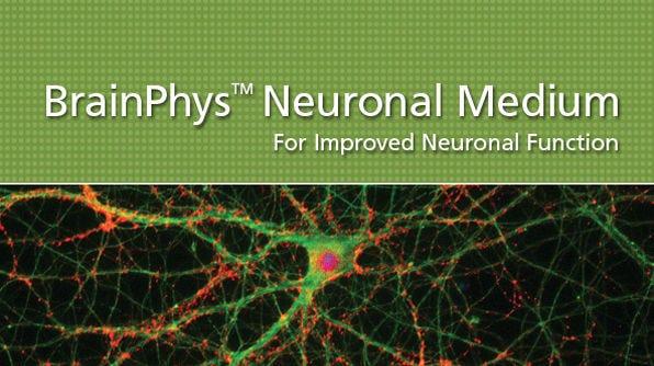BrainPhys™ Neuronal Medium for Improved Neuronal Function