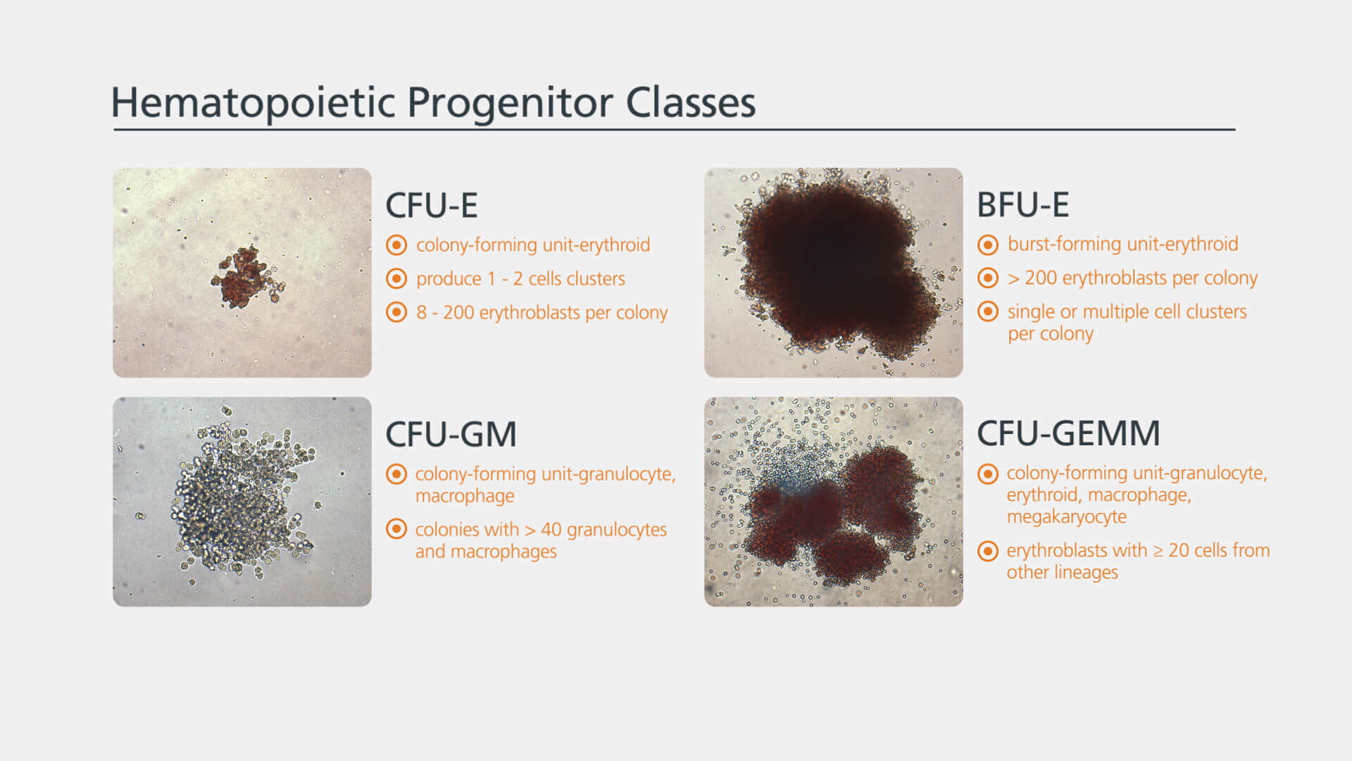 Hematopoietic Colony Enumeration and Identification: A Brief Overview