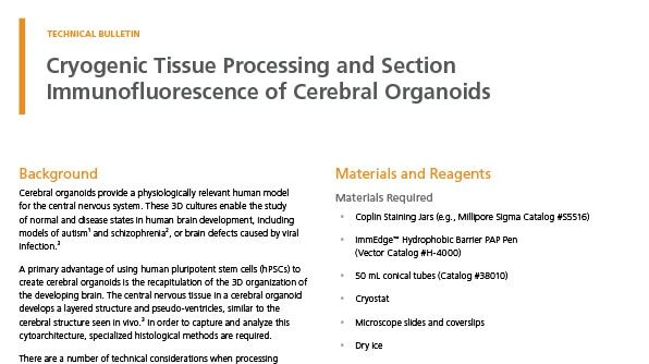 Cryogenic Tissue Processing and Section Immunofluorescence of Cerebral Organoids