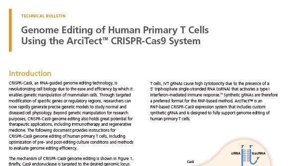 Genome Editing of Human Primary T Cells Using CRISPR-Cas9