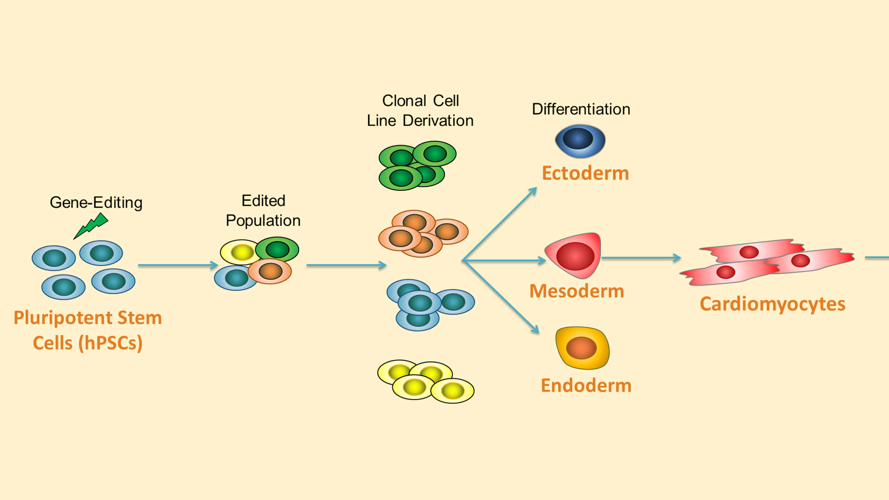 Highly Efficient Single-Cell Human Pluripotent Stem Cell Cloning and Robust Cardiomyocyte Differentiation