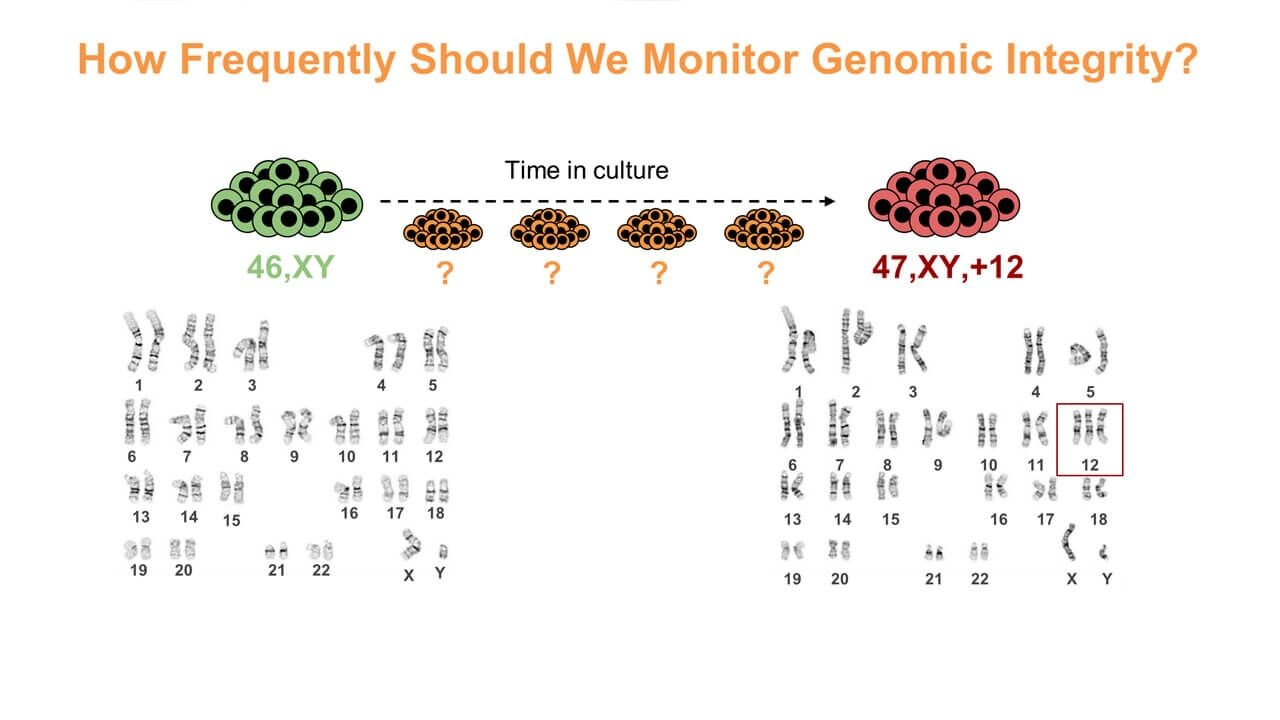 Maintaining and Assessing High-Quality hPSC Cultures