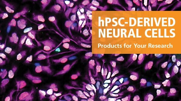 hPSC-Derived Neural Cell Research