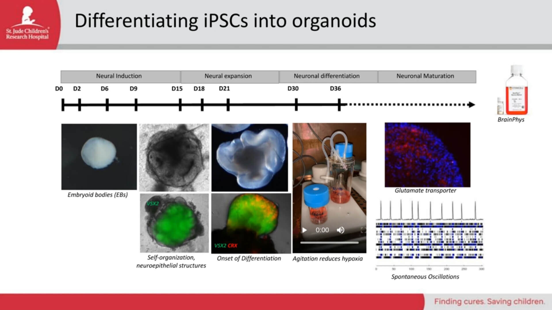 iPSCs As Models, Part 1: What Are Induced Pluripotent Stem Cells and How Do You Use Them?