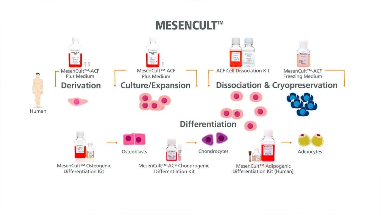 MesenCult™ for Mesenchymal Stromal Cell Derivation, Culture & Differentiation
