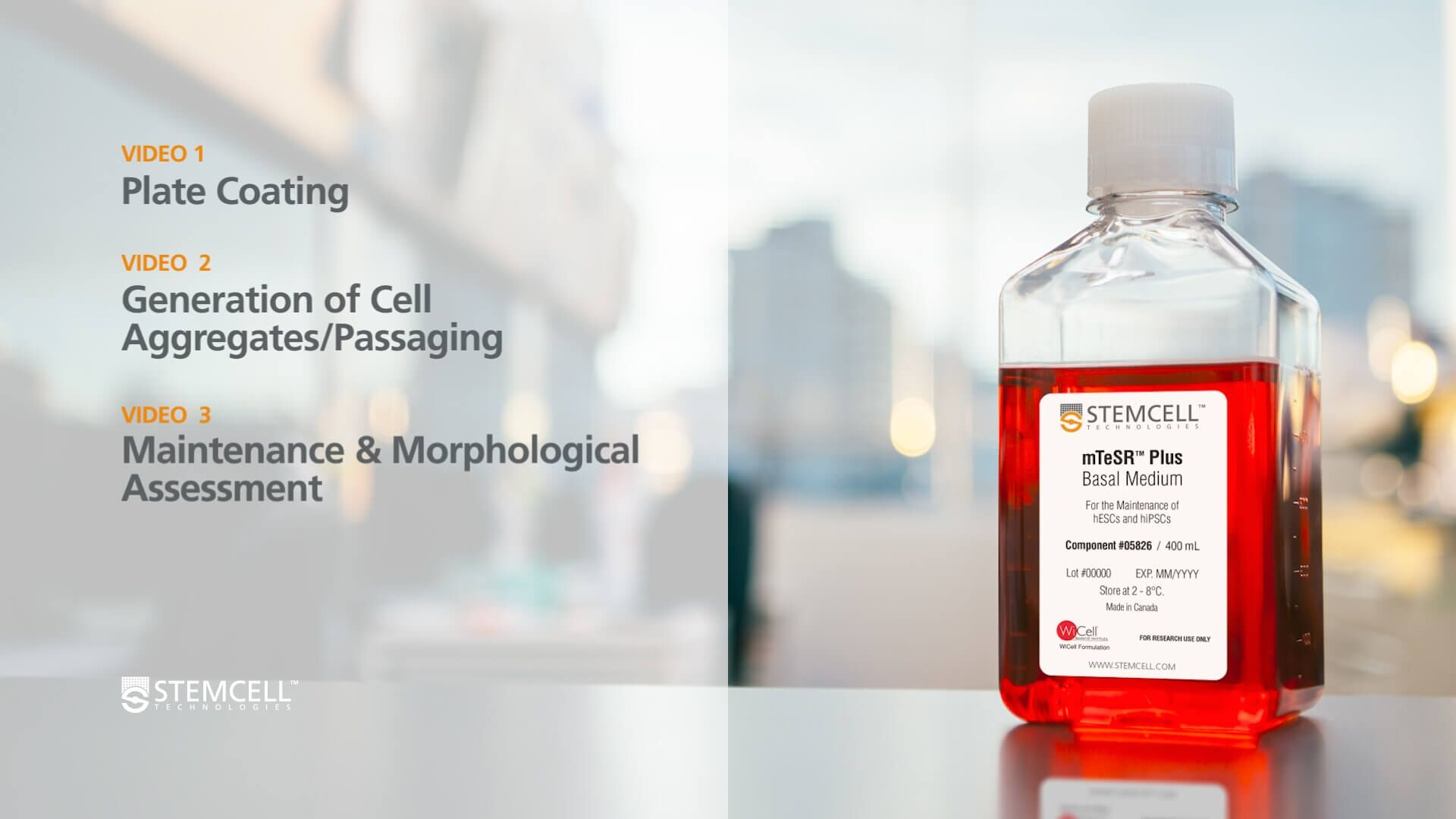 How to Transition Human Pluripotent Stem Cells into mTeSR™ Plus from Other Feeder-Free Media