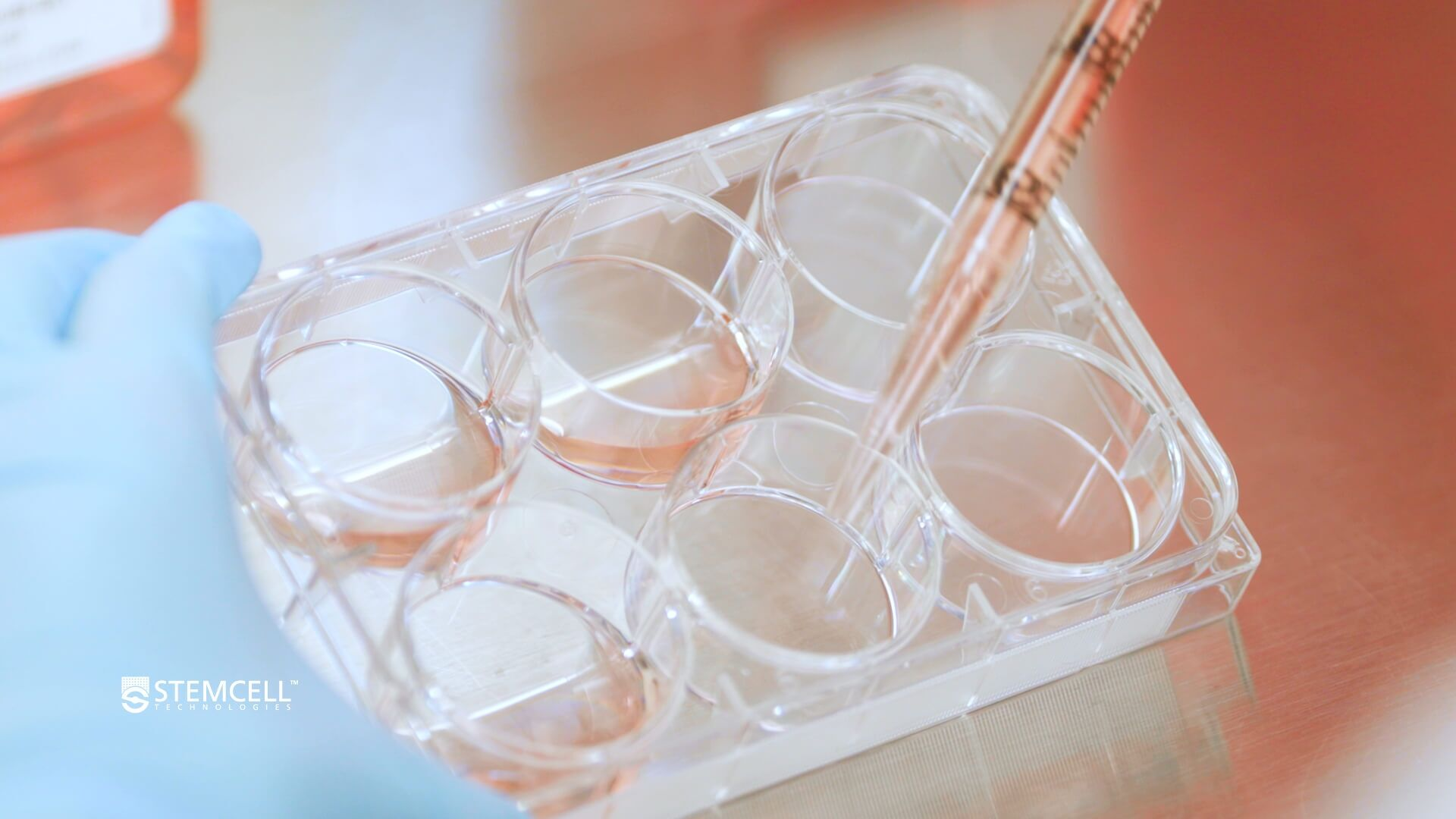 How to Coat Plates for Human Pluripotent Stem Cell (hPSC) Cultures in mTeSR™ Plus