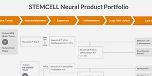 STEMCELL Neural Product Portfolio