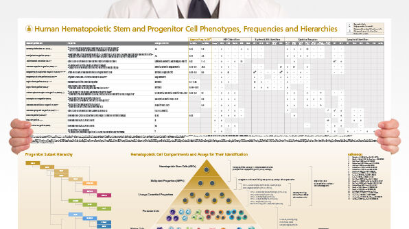 Human Hematopoietic Stem and Progenitor Cell Phenotyping