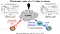 T Cell Differentiation and Cancer Immunity