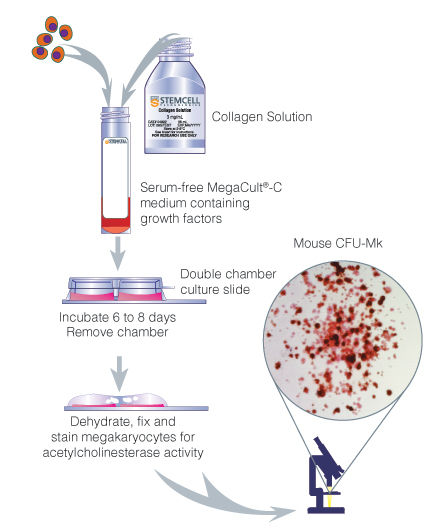 Procedure Summary for Assays of Mouse Megakaryocytic Progenitors