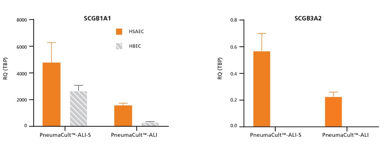 Relative expression of SCGB1A1 and SCGB3A2 was higher in HSAEC cultured in PneumaCult™-ALI-S compared to PneumaCult™-ALI.