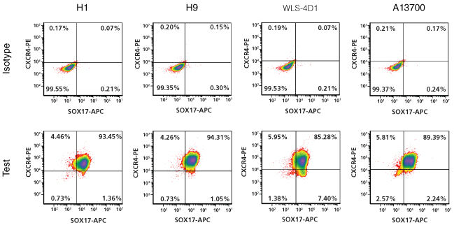 Efficient definitive endoderm differentiation in human ES and iPS cells