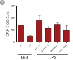 hPSC-Derived HPCs Produce Colonies of Multiple Lineages