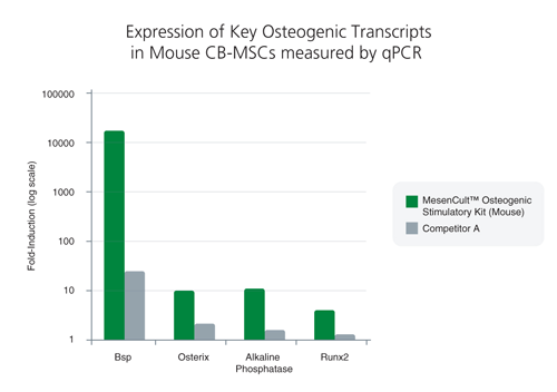 1 MOUSE COMPACT BONE-DERIVED MSC (CB-MSC) DATA<br>Compact bone-derived MSCs exhibited superior expression of key osteogenic transcripts involved in bone differentiation and maturation following treatment with MesenCult™ Osteogenic Stimulatory Kit (Mouse)*