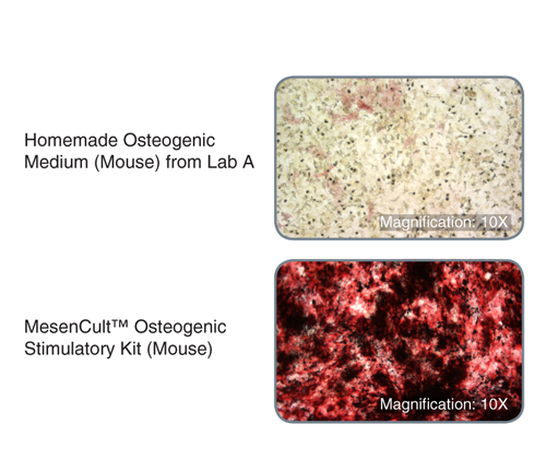 MEFs treated with MesenCult™ Osteogenic Stimulatory Kit (Mouse) displayed substantially increased alkaline phosphatase activity and bone matrix deposition*