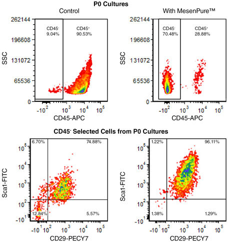 Flow cytometry analysis of P0 MSC culture exposed to MesenPure™ demonstrates significant enrichment of CD45 - /CD29 + /Sca1 + cells