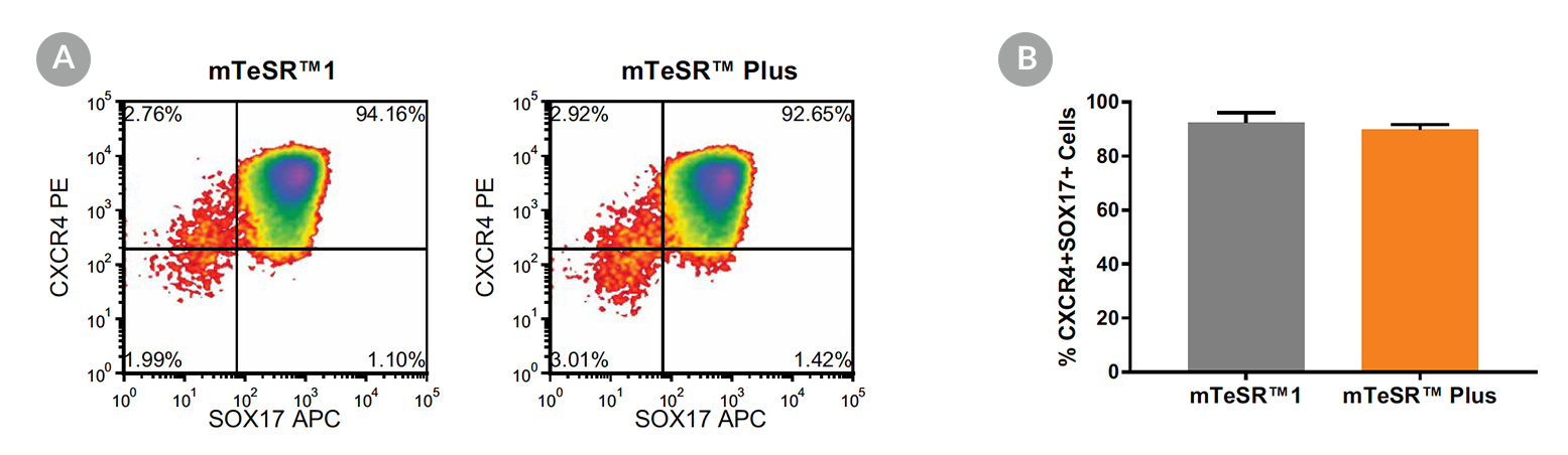 Density plots and quantitative analysis showing CXCR4 and SOX17 expression in cells cultured in mTeSR™1 (daily feeds) or mTeSR™ Plus (restricted feeds), following 5 days of differentiation using the STEMdiff™ Definitive Endoderm Kit.