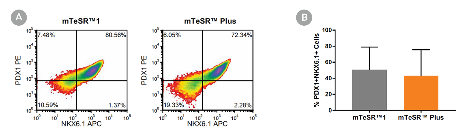 Density plots and quantitative analysis showing PDX-1 and NKX6.1 expression in cells cultured in mTeSR™1 or mTeSR™ Plus, following 5 days of differentiation using the STEMdiff™ Pancreatic Progenitor Kit.