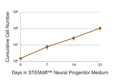 Expansion of Neural Progenitor Cells in STEMdiff™ Neural Progenitor Medium