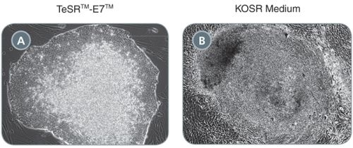 Comparison of Primary iPS Cell Colonies Derived Using TeSR™-E7™ and KOSR-based Medium