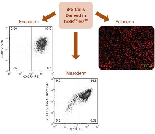 Directed Differentiation of iPS Cells to All Three Germ Layers