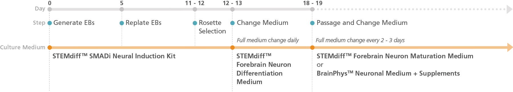 Experimental Protocol Schematic for STEMdiff™ Forebrain Neuron Differentiation and Maturation Kits (Embryoid Body Protocol)