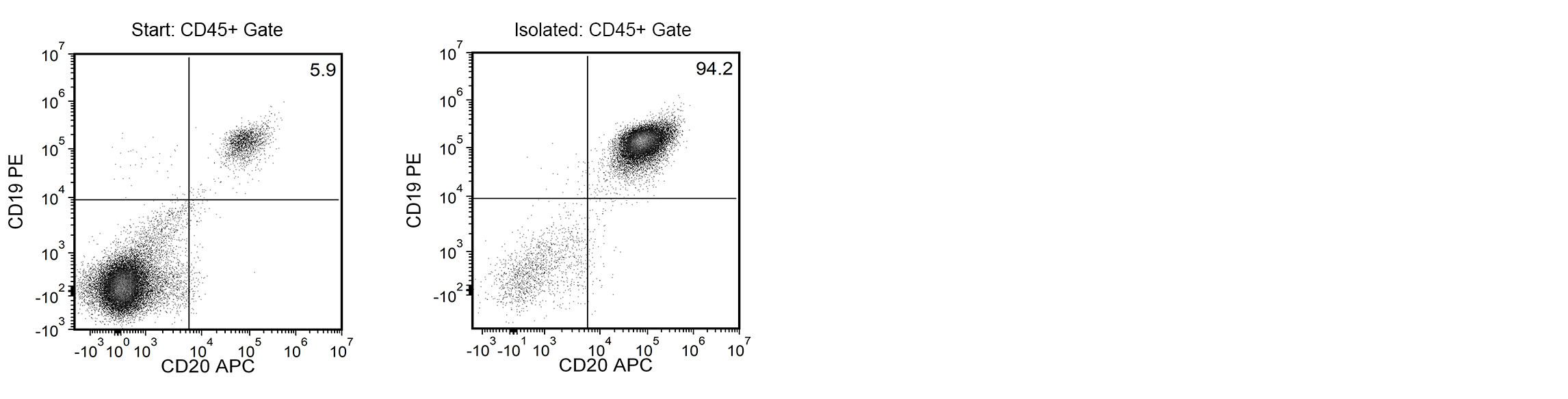 Using the EasySep™ Release Human APC Positive Selection Kit, the frequencies of CD45+ cells in the starting and isolated fractions are 5.9% and 94.2%, respectively.