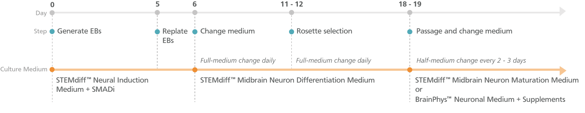 Experimental Protocol for STEMdiff™ Midbrain Neuron Differentiation and Maturation Kits (Embryoid Body Protocol)