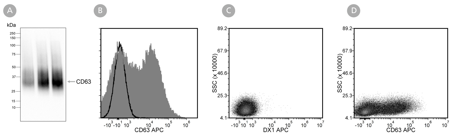 Data showing western blot analysis of extracellular vesicles isolated from mesenchymal stromal cell-conditioned medium with Anti-Human CD63 Antibody, Clone H5C6 and flow cytometry analysis of human peripheral blood mononuclear cells labeled with Anti-Human CD63 Antibody, Clone H5C6 .