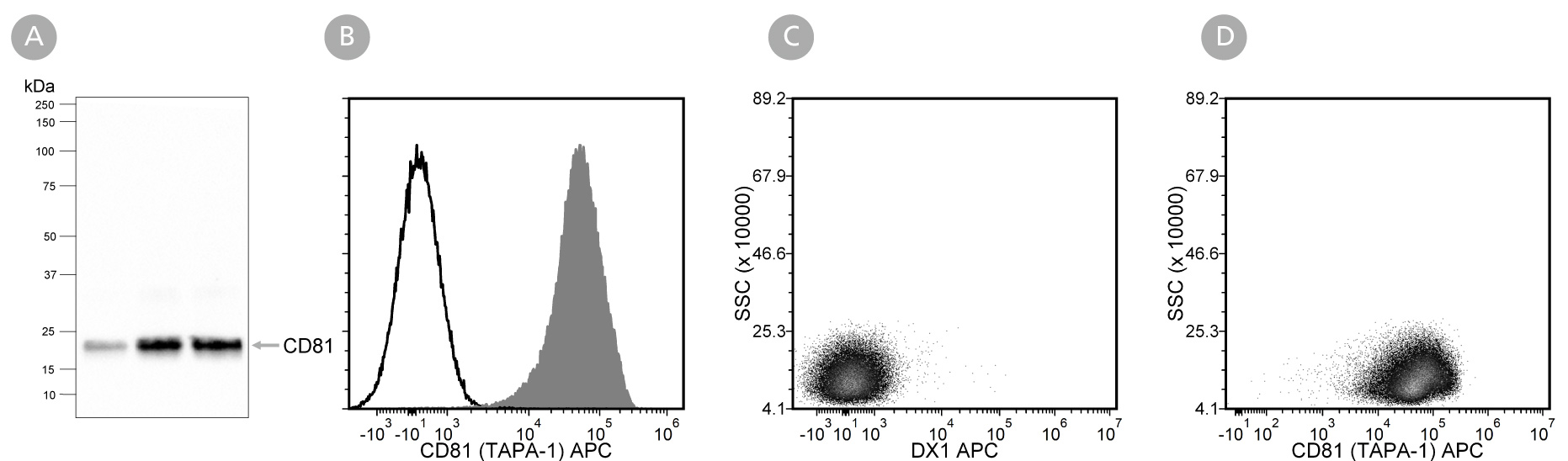 Data showing western blot analysis of extracellular vesicles isolated from mesenchymal stromal cell-conditioned medium with Anti-Human CD81 (TAPA-1) Antibody, Clone 5A6 and flow cytometry analysis of human peripheral blood mononuclear cells labeled with Anti-Human CD81 (TAPA-1) Antibody, Clone 5A6.