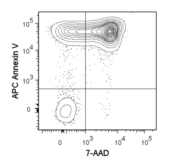 Figure showing flow cytometry analysis of C57BL/6 mouse thymocytes incubated at 37°C with 1 µM dexamethasone overnight. Cells were harvested and labeled with APC-conjugated Annexin V and 7-AAD.