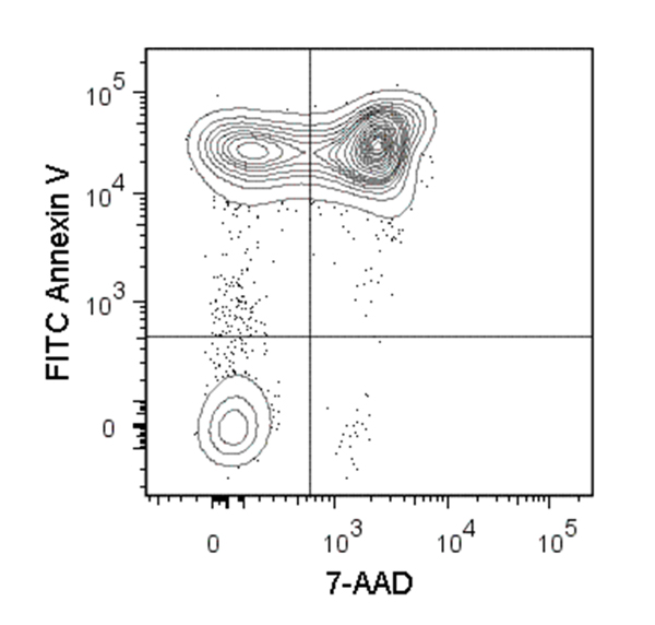 Figure showing flow cytometry analysis of C57BL/6 mouse thymocytes incubated at 37°C with 1 µM dexamethasone overnight. Cells were harvested and labeled with FITC-conjugated Annexin V and 7-AAD.