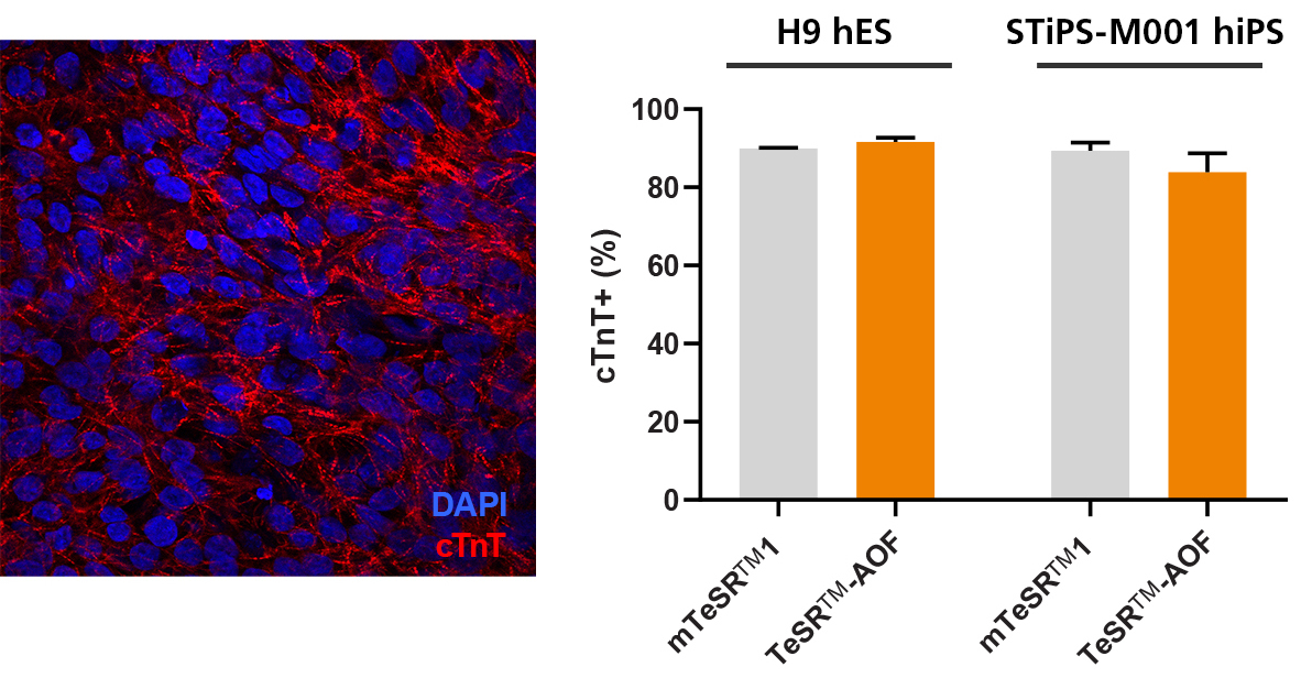 hPSCs Culture in TeSR™-AOF Differentiate to Cardiomyocytes with the STEMdiff™ Cardiomyocyte Differentiation Kit