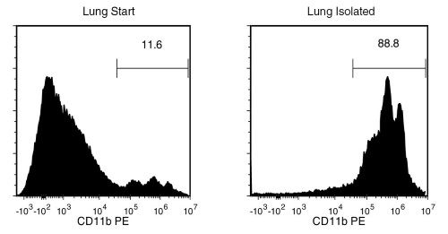 Typical EasySep™ Mouse CD11b Positive Selection Profile from Mouse Lung Tissue